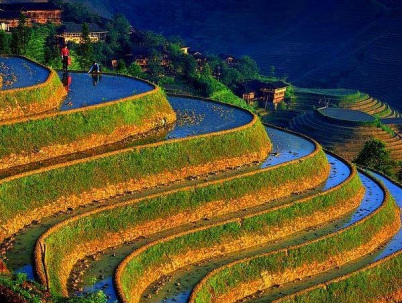 Asian rice farming